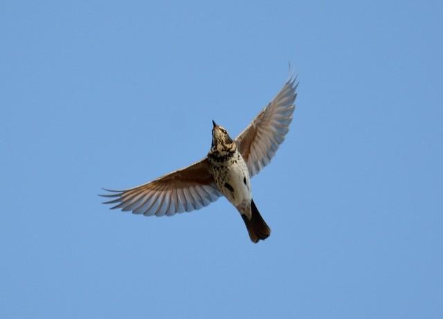 【愛鳥週間】県鳥の画像を貼ってくの画像58枚目!