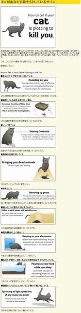 猫の画像28枚目!