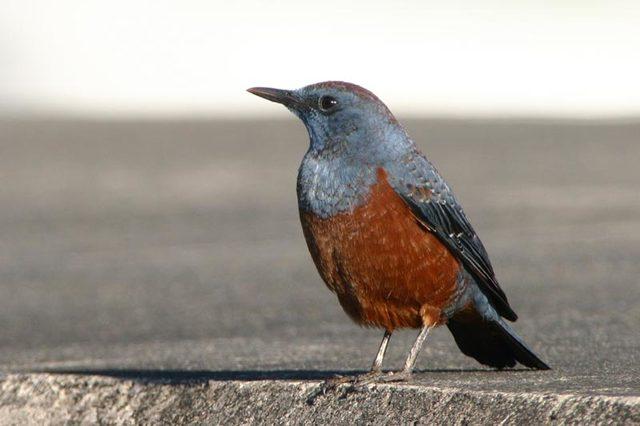 冬の鳥スレ<br />この季節に一度は見る鳥<br />スレ画はハクセキレイの画像8枚目!