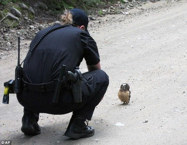 迷子の子フクロウを無事発見への画像1枚目!