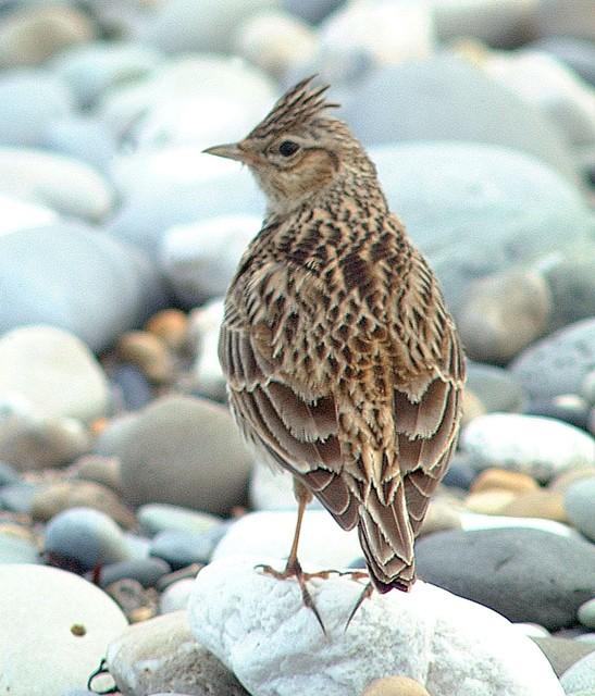 【愛鳥週間】県鳥の画像を貼ってくの画像24枚目!