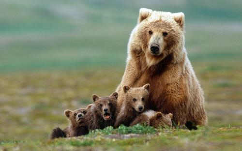 熊対策せずに山行くやつ
