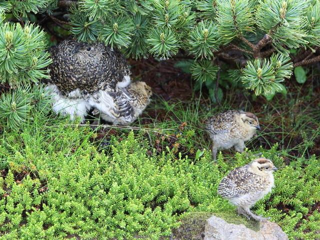 【愛鳥週間】県鳥の画像を貼ってくの画像50枚目!