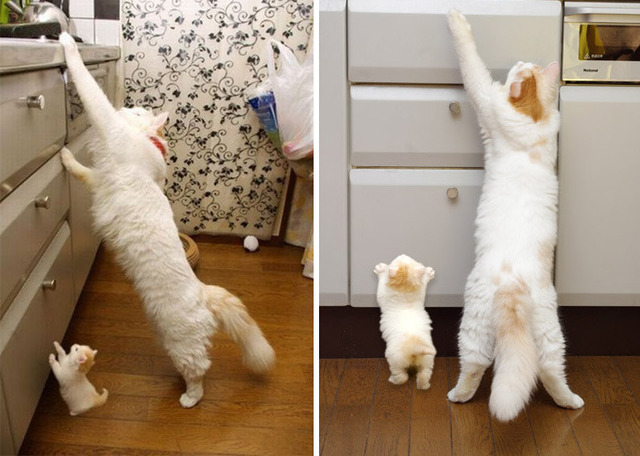 子猫の画像4枚目!