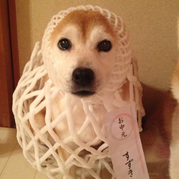 駄犬「ごすずん」の画像34枚目!