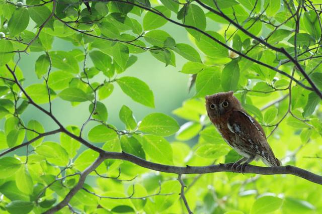 【愛鳥週間】県鳥の画像を貼ってくの画像67枚目!