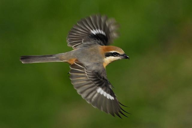 【愛鳥週間】県鳥の画像を貼ってくの画像79枚目!