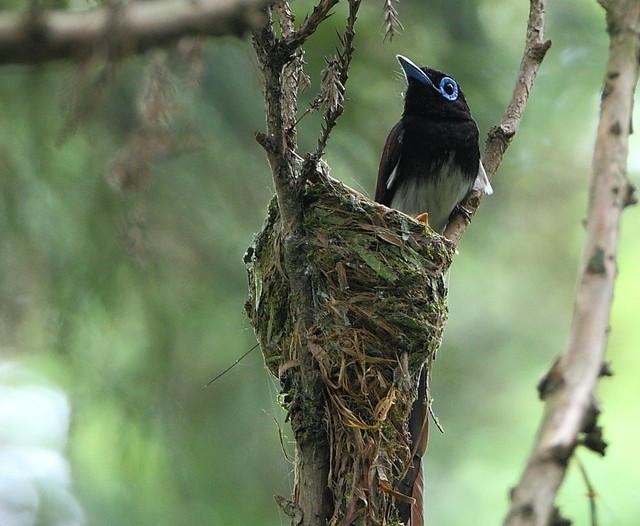 【愛鳥週間】県鳥の画像を貼ってくの画像64枚目!