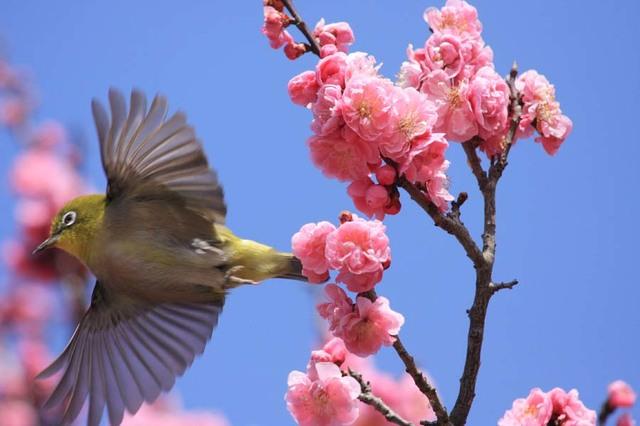【愛鳥週間】県鳥の画像を貼ってくの画像89枚目!
