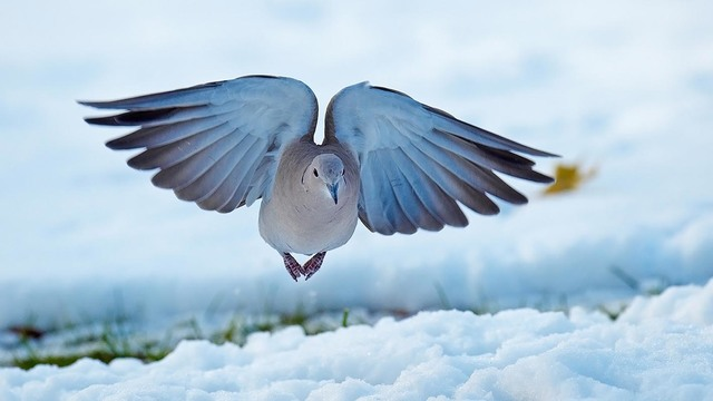 【愛鳥週間】県鳥の画像を貼ってくの画像33枚目!
