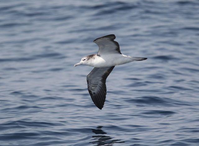 【愛鳥週間】県鳥の画像を貼ってくの画像75枚目!