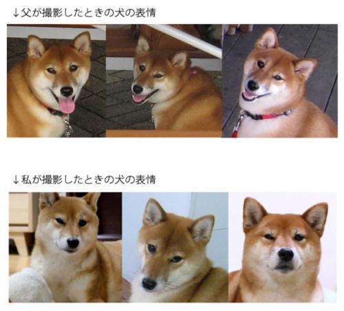 犬スレの画像13枚目!
