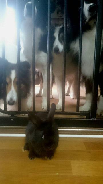 うちのウサギさんの写真うpしますの画像15枚目!