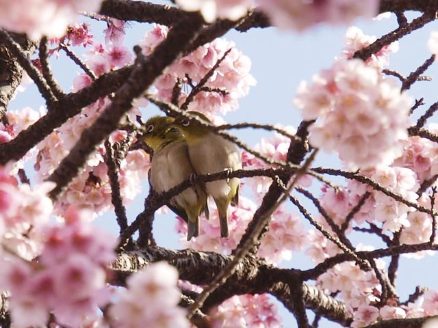 【愛鳥週間】県鳥の画像を貼ってくの画像88枚目!