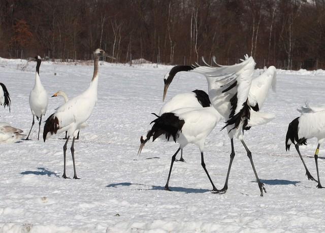 【愛鳥週間】県鳥の画像を貼ってくの画像3枚目!