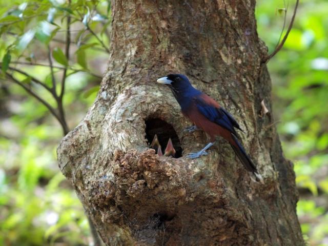 【愛鳥週間】県鳥の画像を貼ってくの画像115枚目!