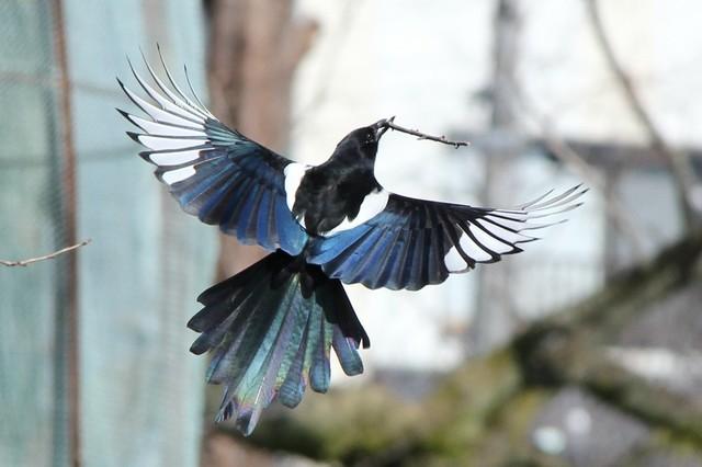 【愛鳥週間】県鳥の画像を貼ってくの画像110枚目!