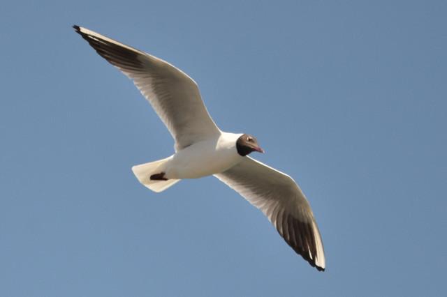 【愛鳥週間】県鳥の画像を貼ってくの画像38枚目!