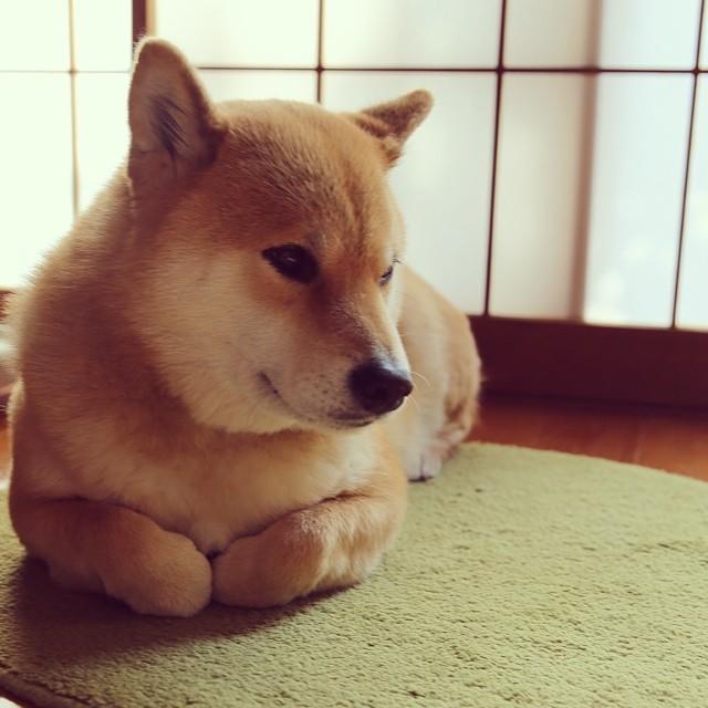 駄犬「ごす!さんぽ」の画像8枚目!