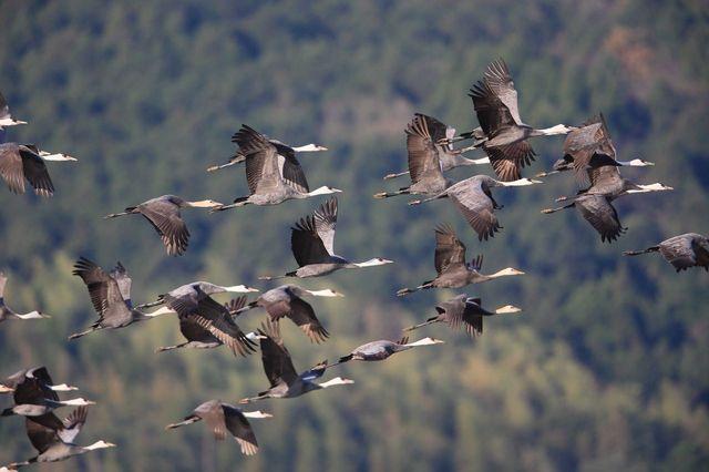 【愛鳥週間】県鳥の画像を貼ってくの画像96枚目!