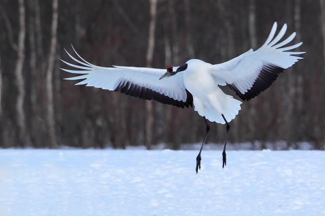【愛鳥週間】県鳥の画像を貼ってくの画像2枚目!