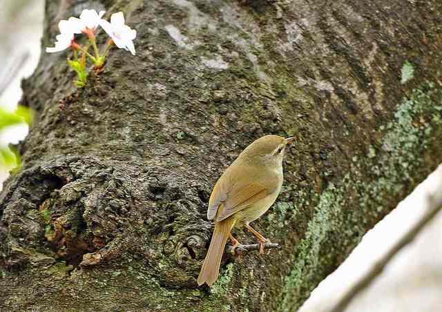 【愛鳥週間】県鳥の画像を貼ってくの画像60枚目!