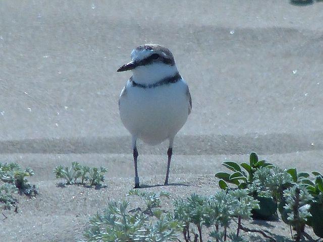【愛鳥週間】県鳥の画像を貼ってくの画像68枚目!