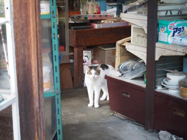 撮り貯まった猫の画像72枚目!