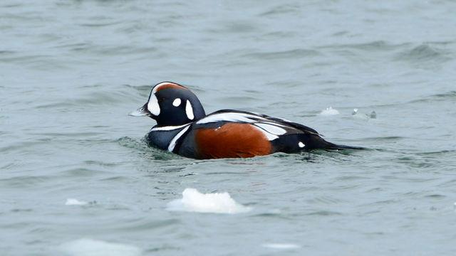 冬の鳥スレ<br />この季節に一度は見る鳥<br />スレ画はハクセキレイの画像12枚目!