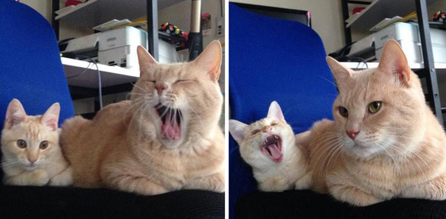子猫の画像5枚目!