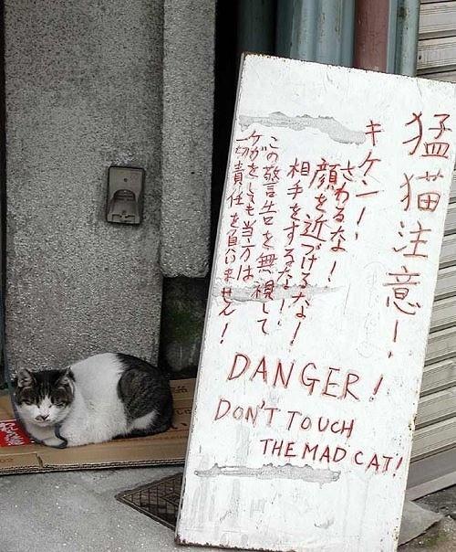 猫の画像39枚目!