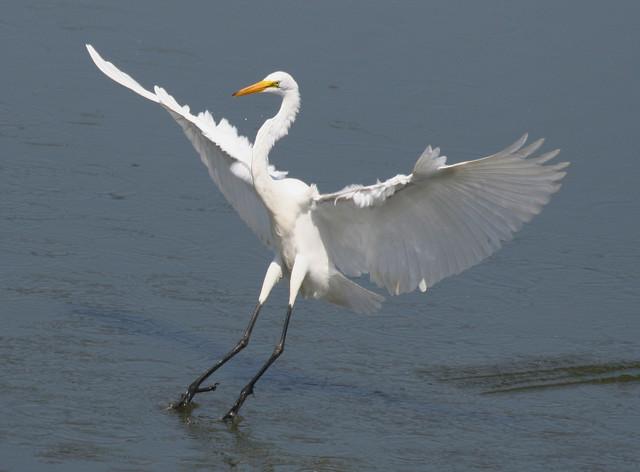 【愛鳥週間】県鳥の画像を貼ってくの画像101枚目!