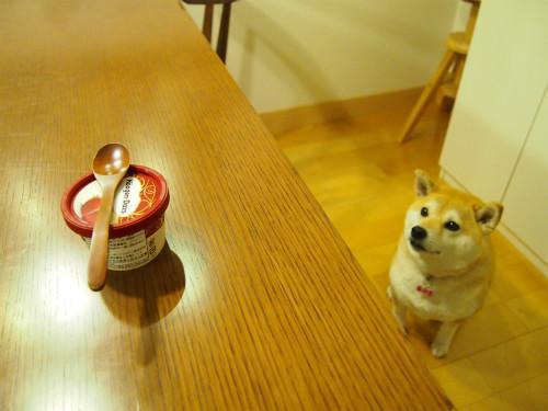 駄犬「ごすずん」の画像17枚目!