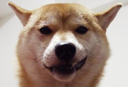 駄犬「ごす」の画像2枚目!