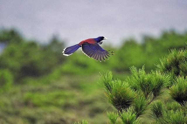 【愛鳥週間】県鳥の画像を貼ってくの画像114枚目!