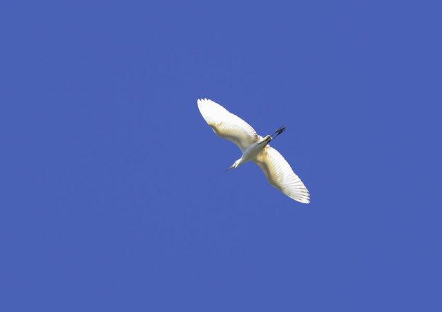 【愛鳥週間】県鳥の画像を貼ってくの画像99枚目!