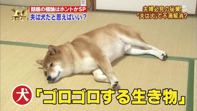 駄犬「ごすずん」の画像18枚目!