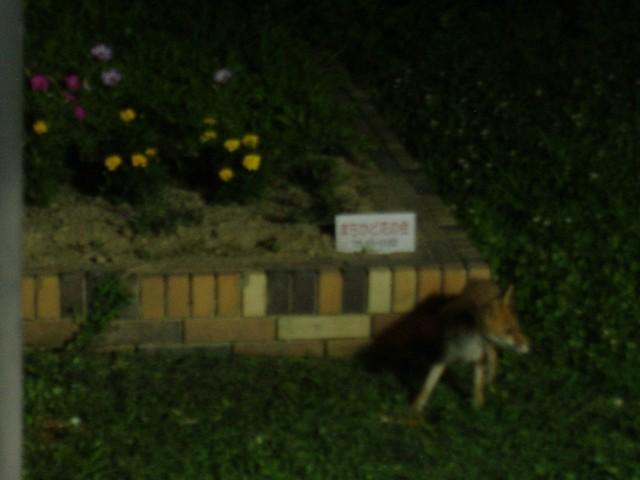 狐スレの画像10枚目!