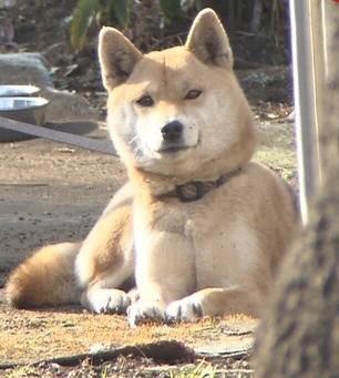 ごすずんスレ・・・駄犬はかわいいの画像2枚目!