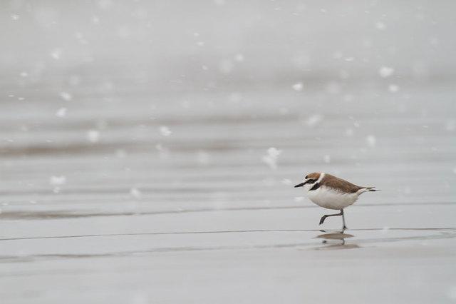 【愛鳥週間】県鳥の画像を貼ってくの画像69枚目!