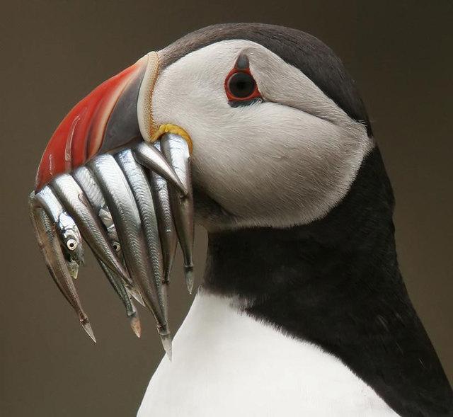 冬の鳥スレ<br />この季節に一度は見る鳥<br />スレ画はハクセキレイの画像17枚目!