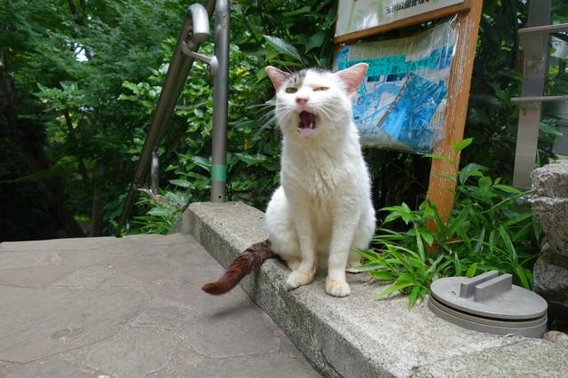撮り貯まった猫の画像66枚目!