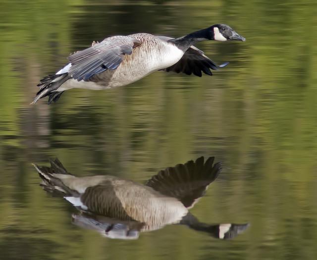 【愛鳥週間】県鳥の画像を貼ってくの画像11枚目!