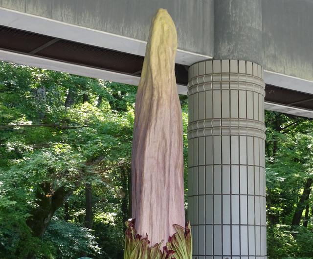 珍植物の画像20枚目!