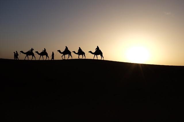 camels-1149803_1280.jpg