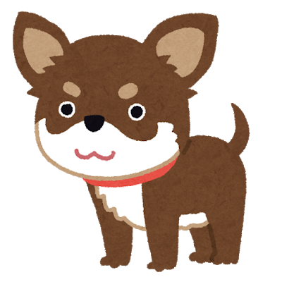 dog_chihuahua_choco_tan.png