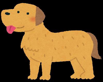 dog_golden_retriever.png